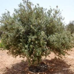 olivier-djerba-decouverte-7jours